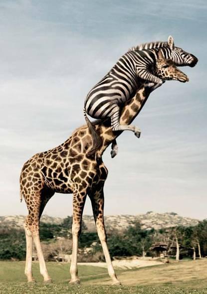 1-1-Funny-animals1.jpg