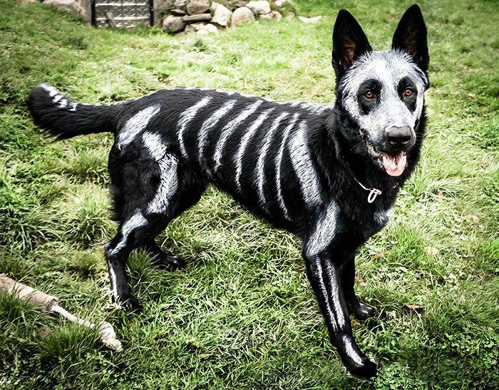 skeleton-dog-halloween-.jpg
